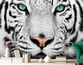 Mantiburi Fotobehang witte tijger 220