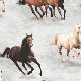 Paarden behang A11709