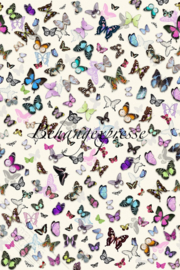 Behangexpresse COLORchoc Wallprint Butterflies INK 6072