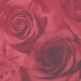 bloemen rozen behang 119502
