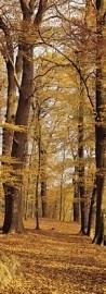 2-1001Komar Fotobehang herfst bos groen oranje behang
