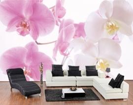 Mantiburi orchideeën Fotobehang Graceful Orchids 3