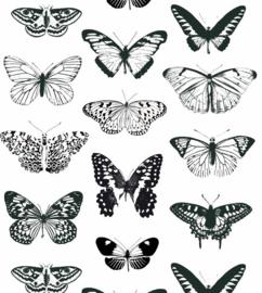 vlinder behang OZ 3261