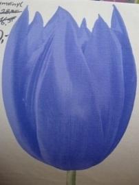 blauw paars creme tulpen vlies behang 06