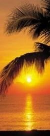2-1255 Komar Fotobehang Palmy Beach Sunrise tropische kleuren behang
