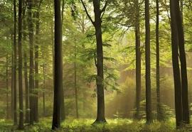 bomen bos fotobehang Idealdecor Autumn Forest 216