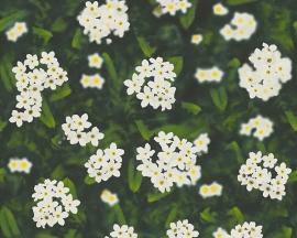 A.S. Creation bloemen behang 95932-1 / 959321