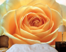 Mantiburi oranje roos Fotobehang The Orange Rose 39