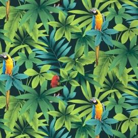 papegaai vogel dieren tropisch behang xx5x
