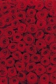 4-077 Komar Fotobehang roses rood rozen behang