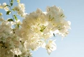 4-120 Komar Fotobehang Morning Sun witte blaadjes behang