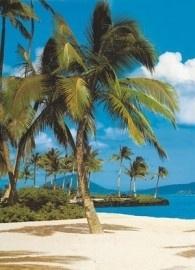 4-038 Komar Fotobehang Hawaii groen palmboom behang