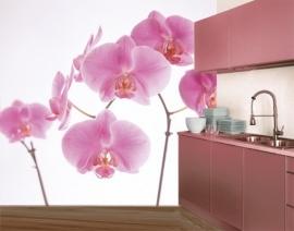 Mantiburi roze orchidee Fotobehang Pink Orchid 35