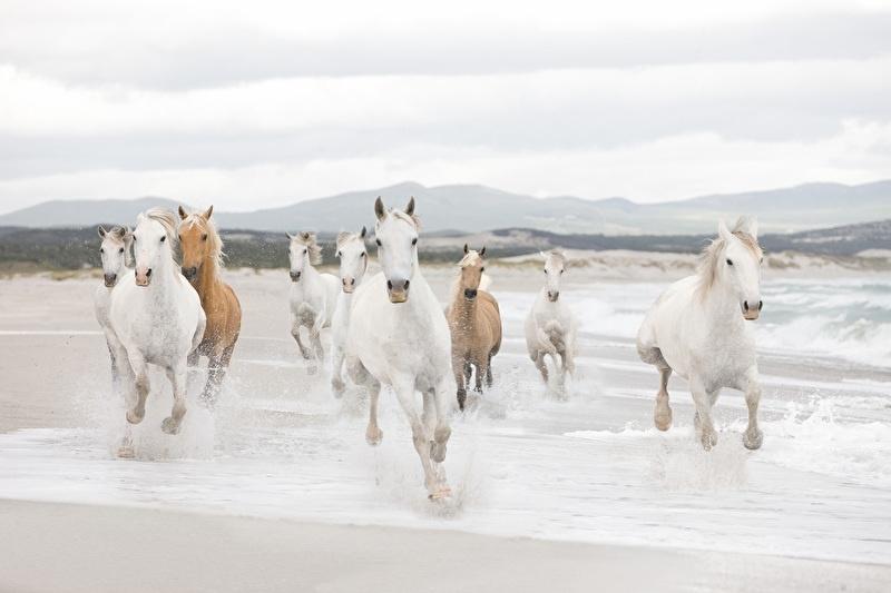 Komar Fotobehang White Horses 8-986