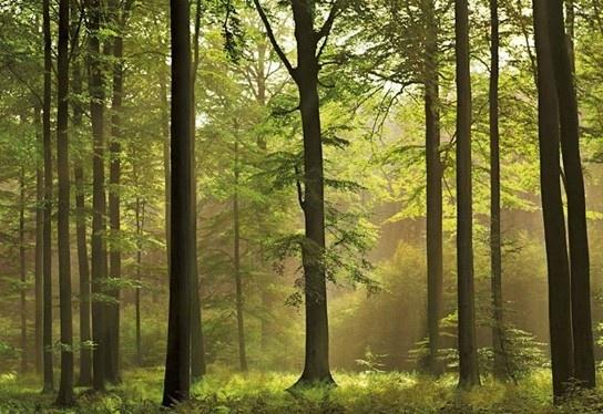 foto behang Idealdecor Autumn Forest 216