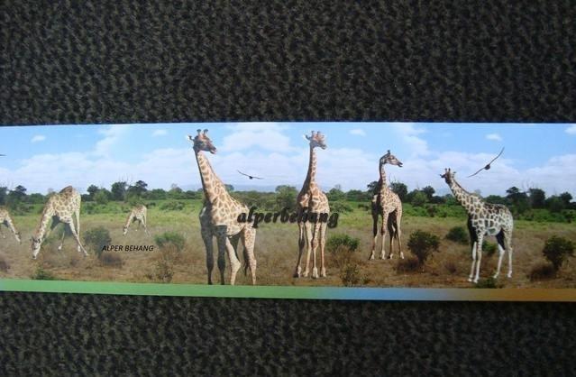 dieren giraf bruin groen behangrand zelfklevend