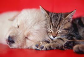 Fotobehang - Kinderkamer - Puppie en kitten