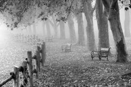 Fotobehang - Zwart-Wit - Herfst - Autumn