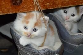 Fotobehang - Kinderkamer - Kittens 2