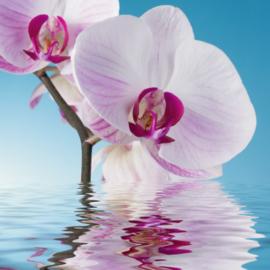 Fotobehang - Woonkamer - Orchidee met water
