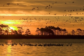 Fotobehang - Natuur - Zonsondergang 1 - Sunset 1