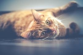 Fotobehang - Kinderkamer - Kat - Cat