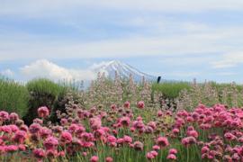 Fotobehang Bergen - Fotobehang Mountain Fuji  ( Japan )