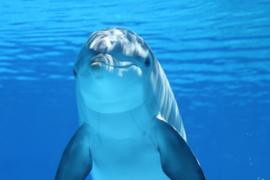 Fotobehang - Dolfijn - Fotobehang Dolfijn - Single