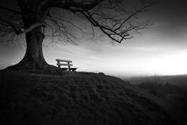 Fotobehang - Zwart-Wit - Boom - Tree