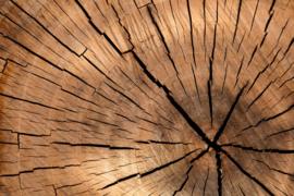 Fotobehang - Hout - Fotobehang Boomhout jaarringen