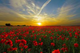 Fotobehang Zonsondergang - Fotobehang Zonsondergang met bloemen