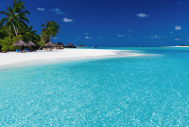 Fotobehang - Strand Palmboom Seychellen