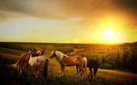 Fotobehang - Dieren - Paarden 5 - Horses 5