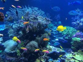 Fotobehang - Tropische vissen