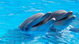 Fotobehang - Dolfijnen - Fotobehang Dolfijnen - Smiling