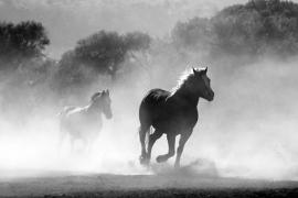 Fotobehang - Dieren - Paard Galop - Galopping Horses