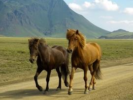 Fotobehang - Dieren - Paarden 4 - Horses 4
