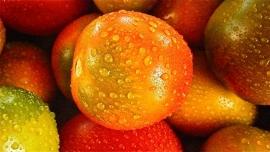 Fotobehang - Eten - Kleurige tomaten - Colorful tomatoes