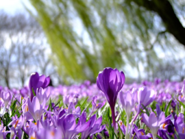 Fotobehang - Bloemen - Lente bloemen