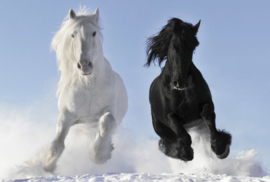 Fotobehang - Paarden in de sneeuw - Horses in the snow