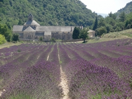 Fotobehang - Bloemen - Lavendelvelden bij Senanque