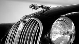 Fotobehang - Jaguar I