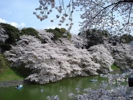 Fotobehang - Bomen & Bos - Bloesembomen - Blossomtrees