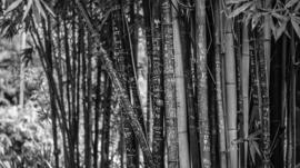 Fotobehang - Zwart wit - Bamboe II