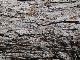 Fotobehang - Bomen & Bos - Boomschors Grijs - Wood Structure Grey
