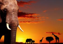 Fotobehang - Dieren - Wilde dieren Afrika
