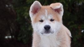 Fotobehang - Kinderkamer - Puppy 1