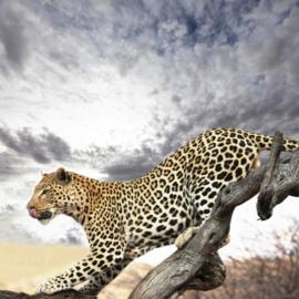 Fotobehang - Luipaard