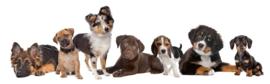 Fotobehang - Kinderkamer - Puppies Duitse herder, Collie, Labrador, Berner Sennen etc.