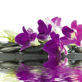 Fotobehang - Woonkamer - Orchidee ( paars )